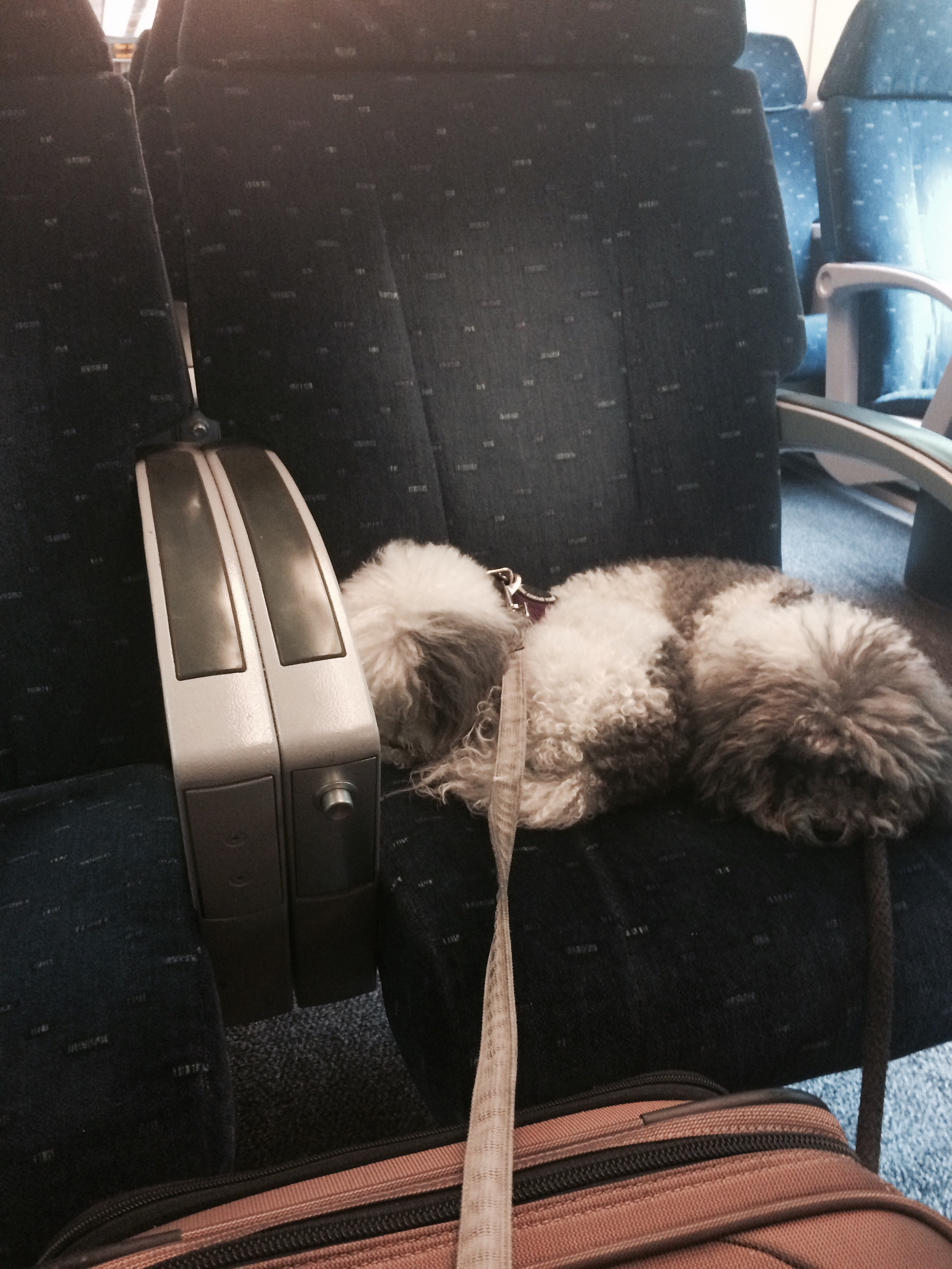European  travel is not only civilized, it's dog friendly