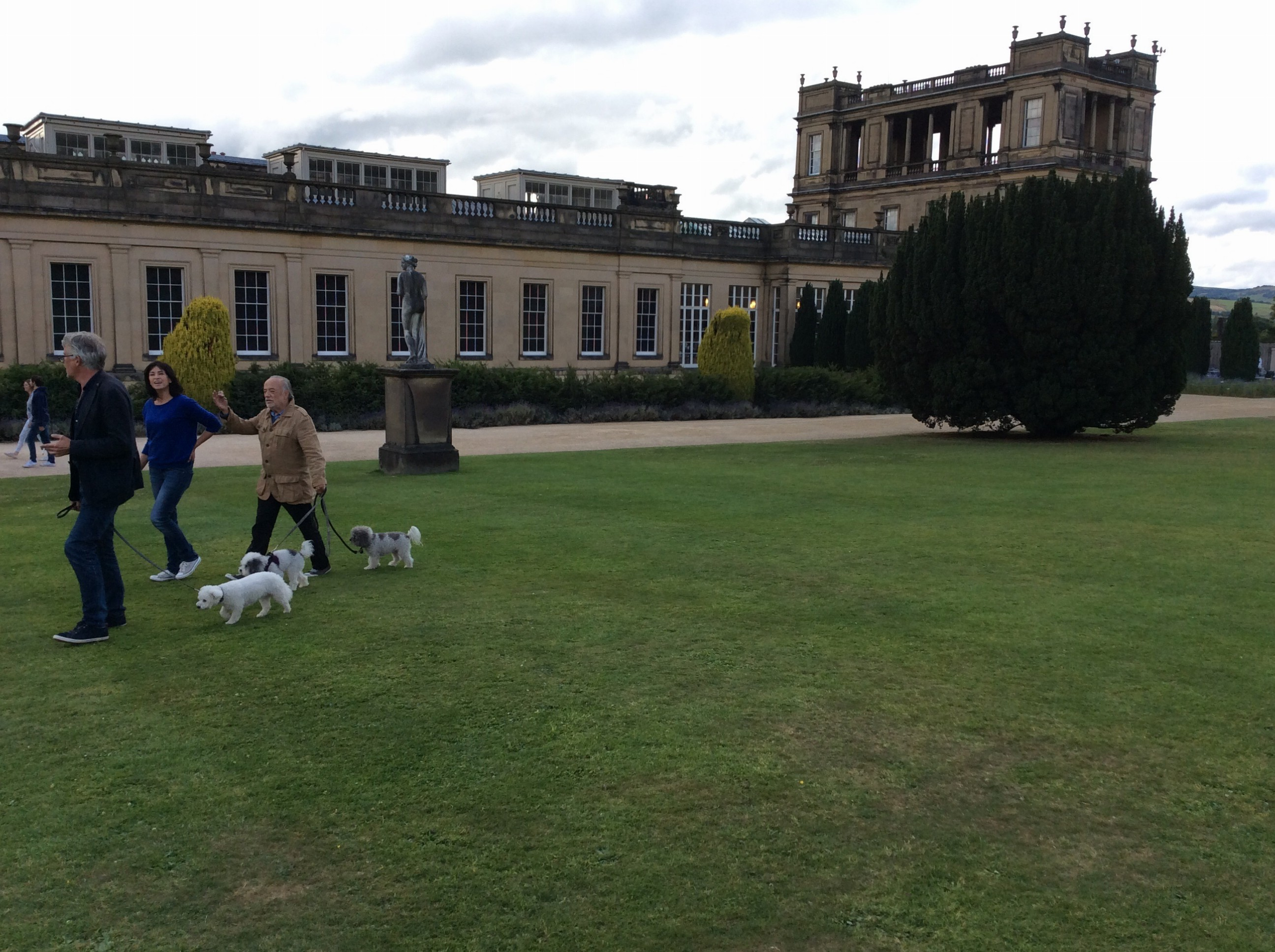 Dogs were in heaven.  They'd never seen so much grass!